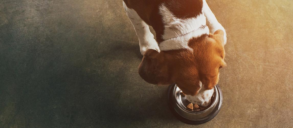 Evolve-Dog-Food-Review