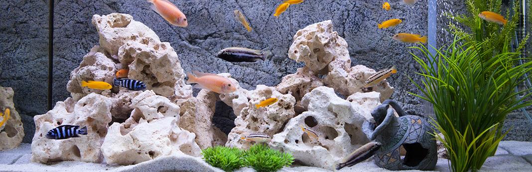 10 Best Floating Aquarium Plants: The Complete Species Guide