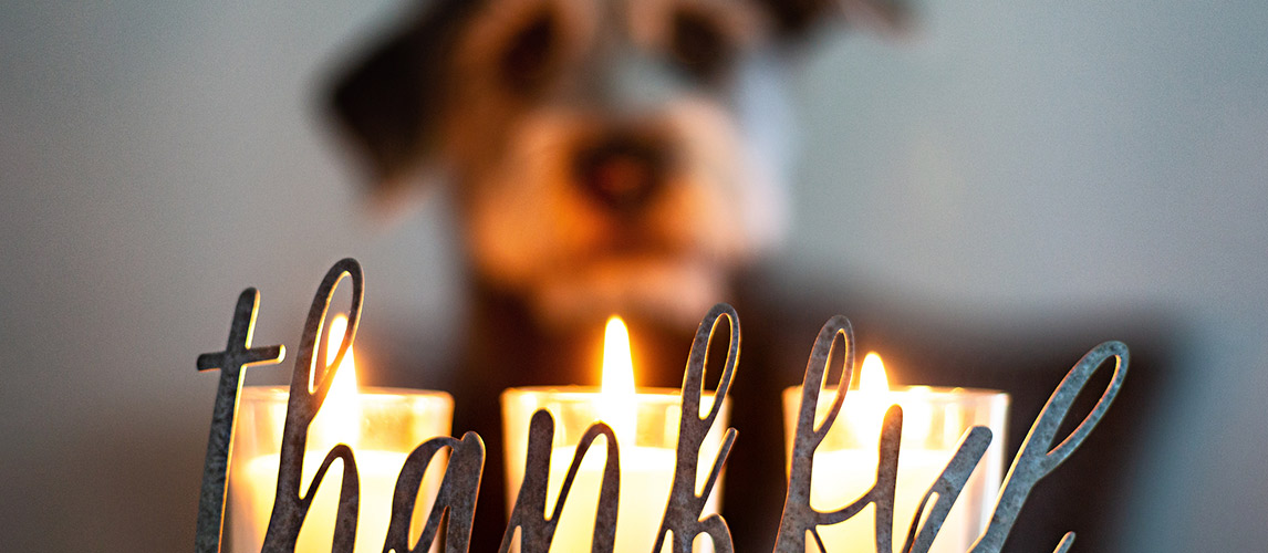 Best-Candles-for-Pet-Odor