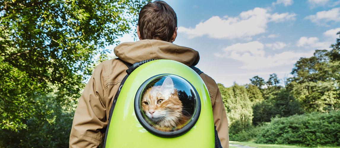 Best-Cat-Backpacks