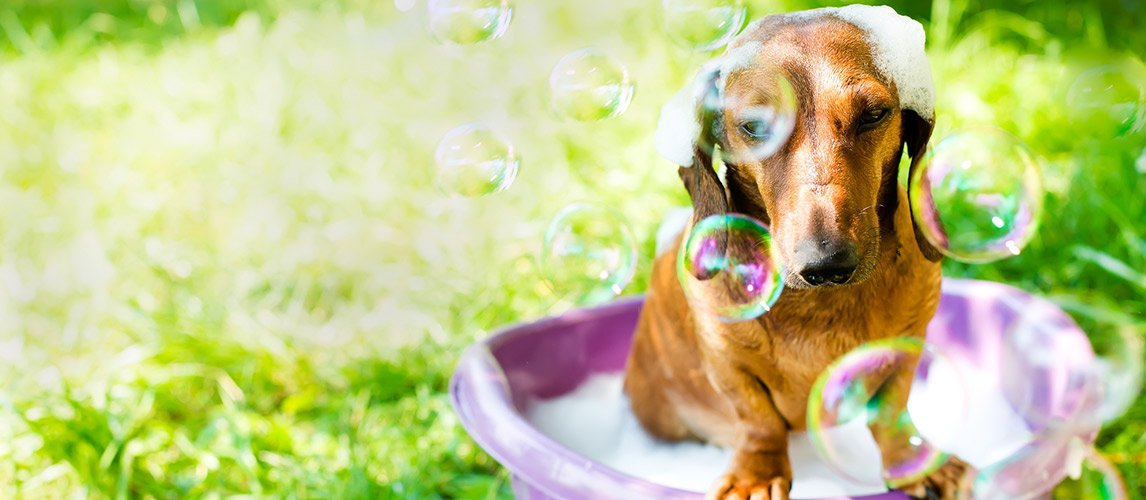 Best-Dog-Whitening-Shampoo