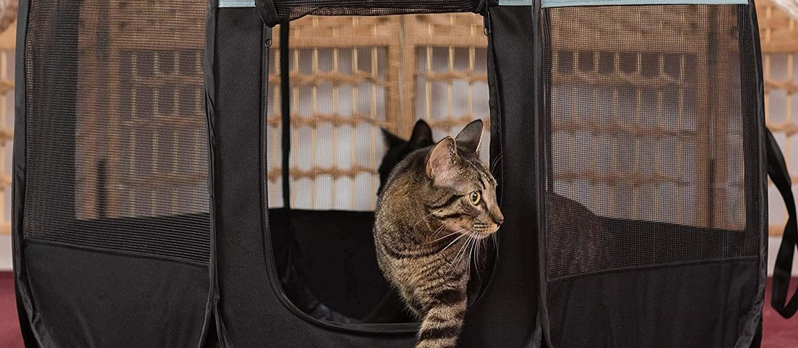 Best-Outdoor-Cat-Enclosures
