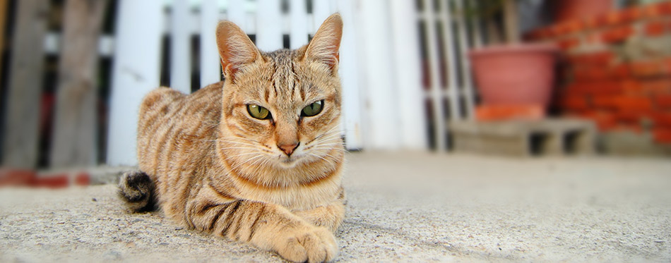Cat angry look with home