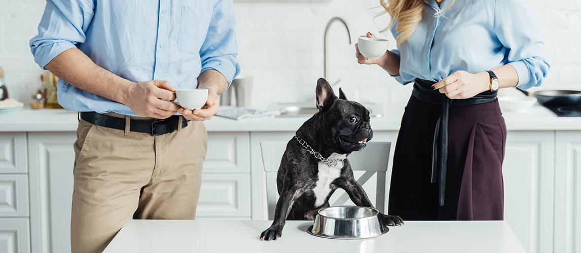 Gentle-Giants-Dog-Food-Review