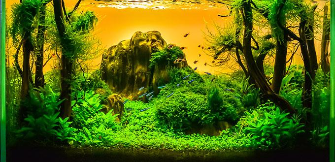 Image of landscape nature style aquarium tank