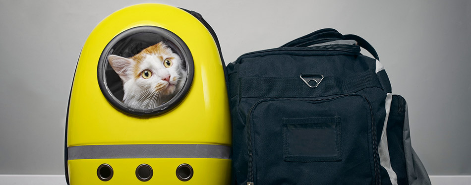 Tabby cat looking curious out of a backpack carrier next to a travelling bag