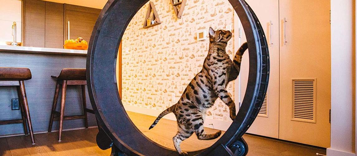 Best-Cat-Exercise-Wheel