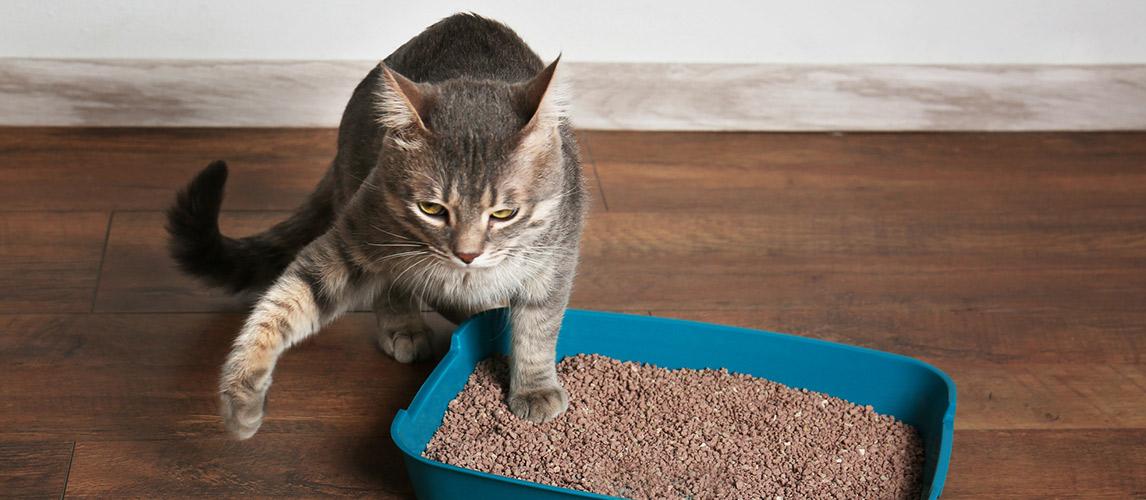 Best-Crystal-Cat-Litter