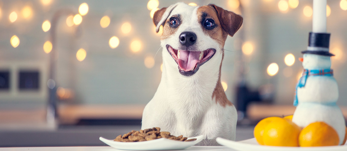 Chicken-Soup-for-the-Soul-Dog-Food-Review