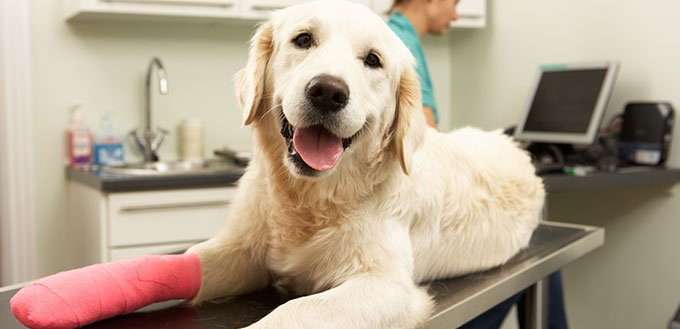 Female Veterinary Surgeon Treating Dog