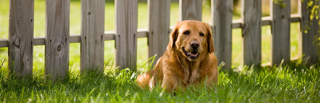 5 Ways to Dog Proof Your Fence
