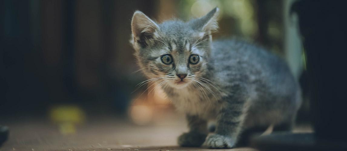 Best-Cat-Litter-For-Kittens