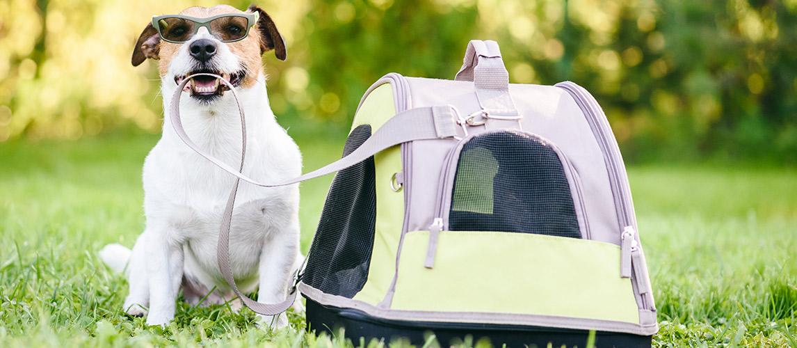 Best-Dog-Carrier-Purses