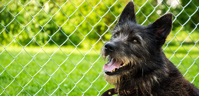 beautiful portrait of a shaggy black dog in a collar with an open mouth on a green background with a mesh fenc