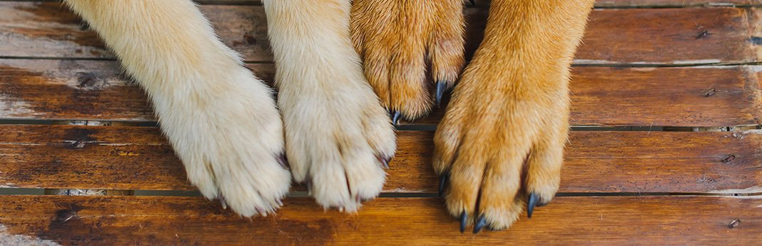 5 Ways to Stop Your Dog's Nail From Bleeding
