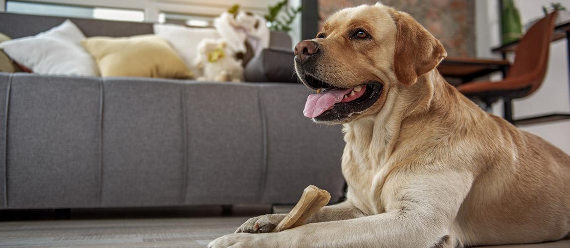 Best-Dog-Jerky-Treats