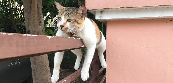 Cat bored of humans lying on the fence