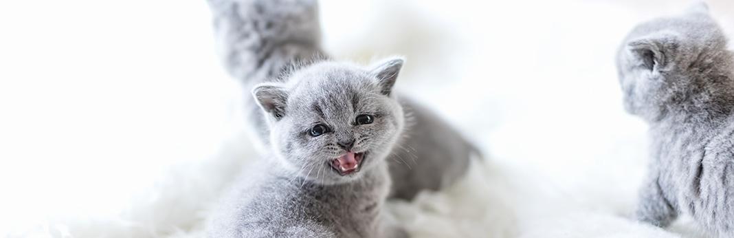 Help Your Teething Kitten in 3 Simple Steps