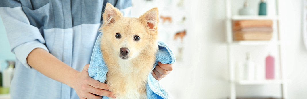 How-To-Keep-a-Dog-Calm-While-Grooming