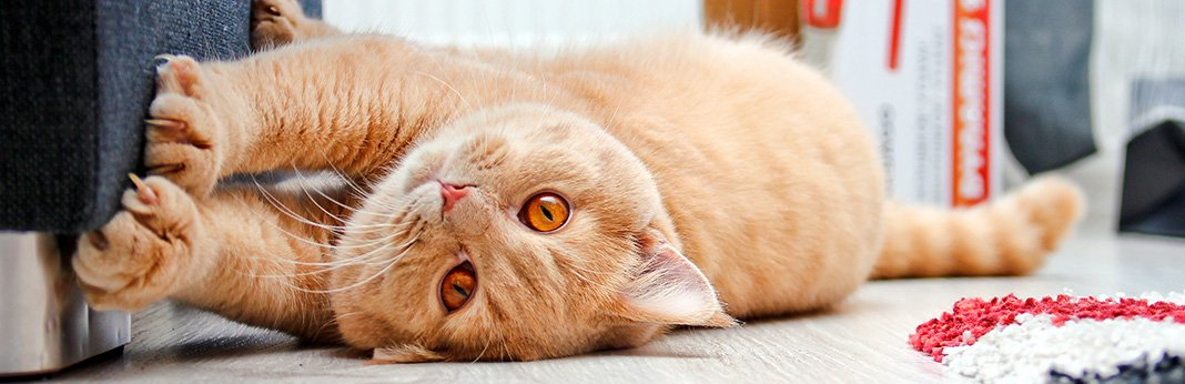 Is My Cat Bored? 5 Ways To Relieve Your Cat's Boredom