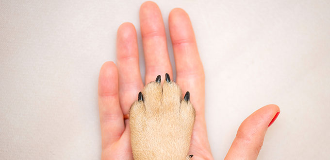woman's hand and the paw of the dog