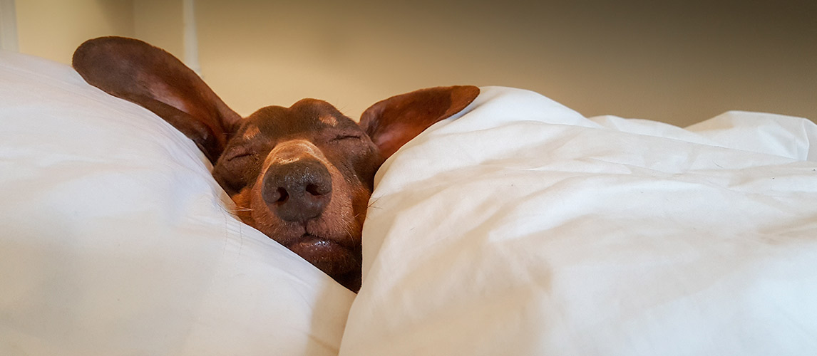 Best-Pet-Friendly-Comforters-for-Dog-Hair