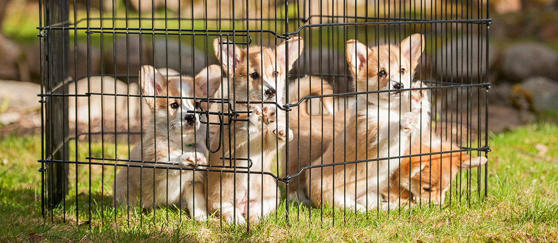Best-Portable-Dog-Fence-for-RV