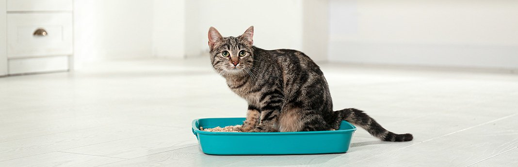 Cat Toilet Training: Here are the 7 Reasons Why You Shouldn't Do It!