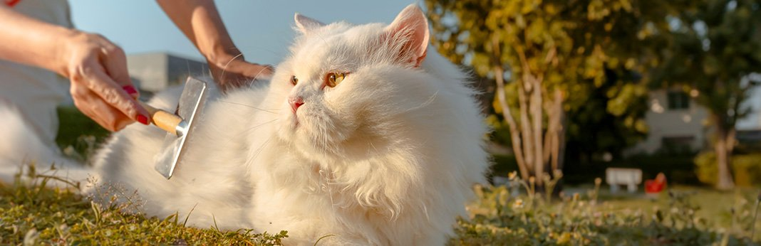 How to Reduce Cat Shedding In 5 Simple Ways