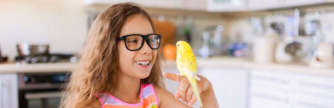 How to Tame a Parrot - Dos and Don'ts to Gain Your Bird's Trust
