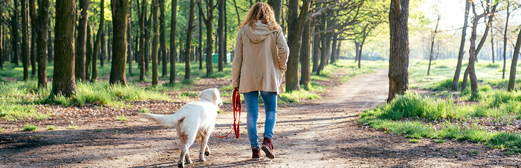 How to Train Your Dog to Walk Off-Leash