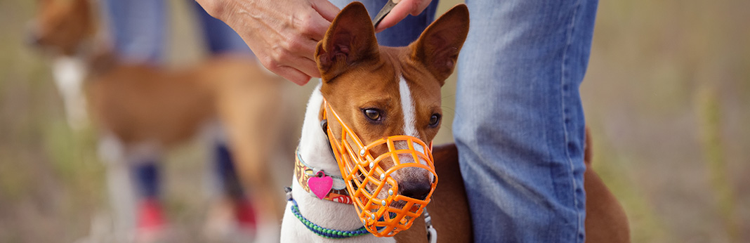Muzzle Training for Dogs We Answer on How, Why, and When to Use a Muzzle