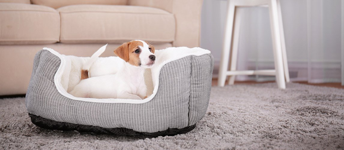 Best-Dog-Beds-for-Small-Dogs