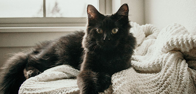 Chat noir pose