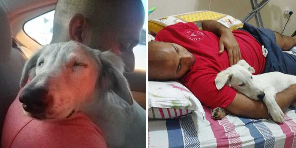 Dog Sleeps Soundly On His Rescuer As He Is Taken Home To Safety