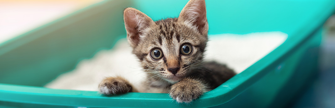 How to Stop Cat Litter Tracking and Scattering All Over Your House