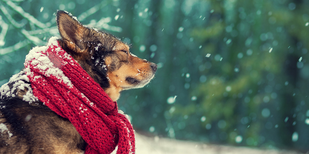 Keeping pets safe in poor weather: make sure that you include your pets in your preparations for bad weather