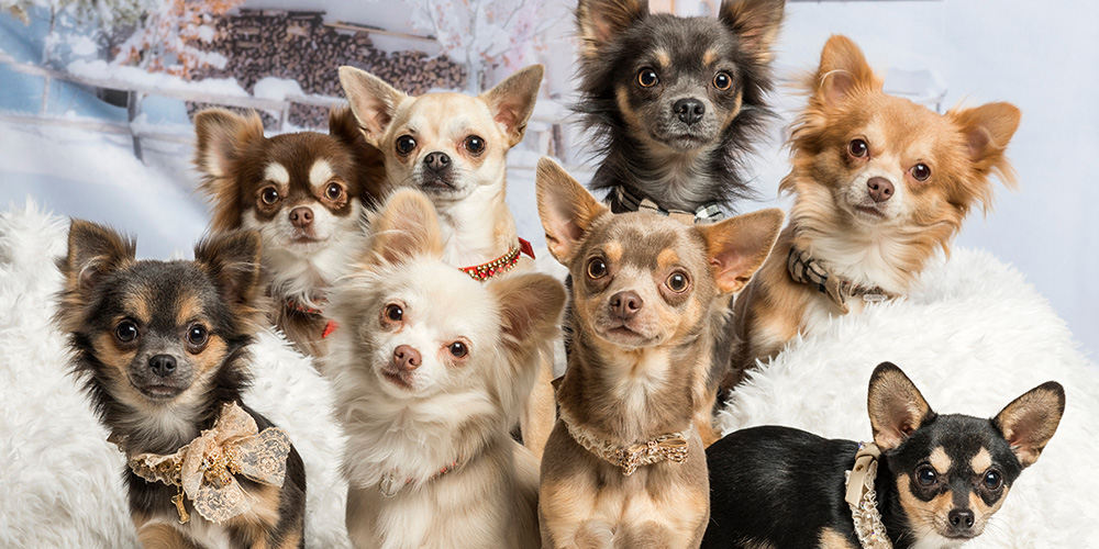 Nearly-2-dozen-dogs-found-inside-downtown-L.A.-RV-and-their-pups-need-new-homes