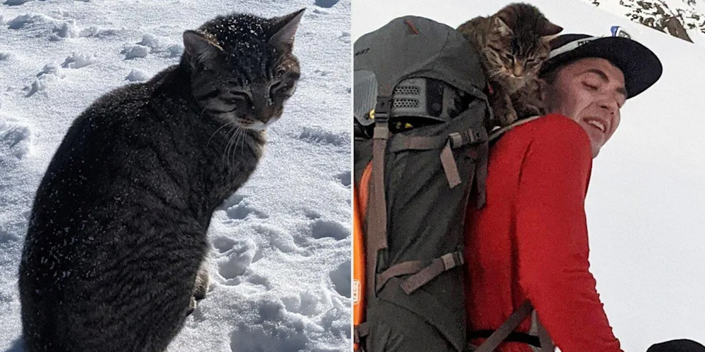 A-Cat-Lost-For-4-Days-on-a-Swiss-Mountain-Followed-Hikers-Back-Home