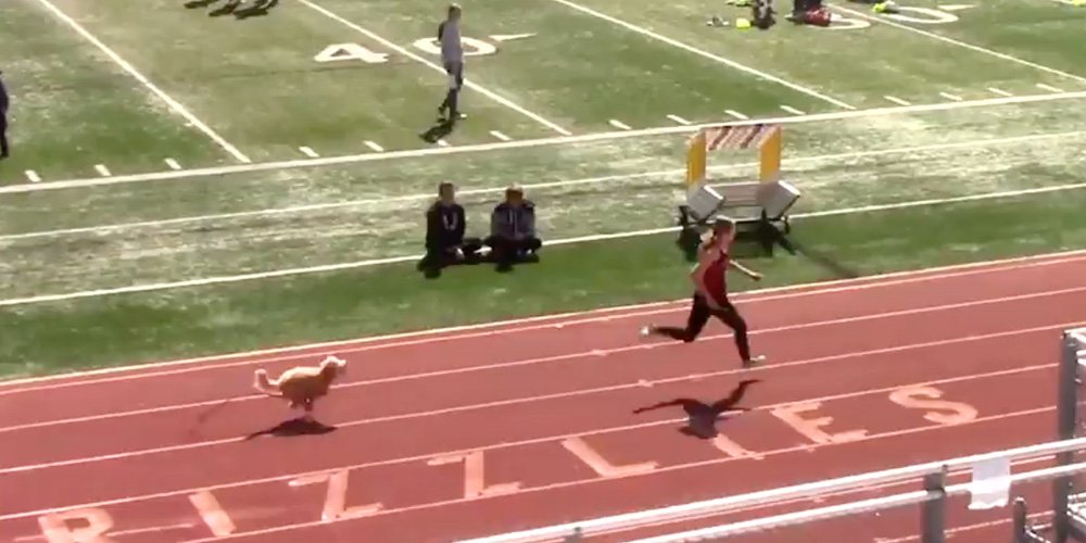 A Speedy Canine Joined a Utah Track Meet, Outstripping All Competitors!
