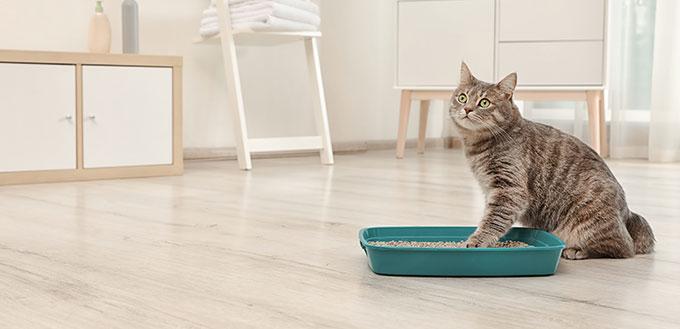 Adorable grey cat near litter box indoors.