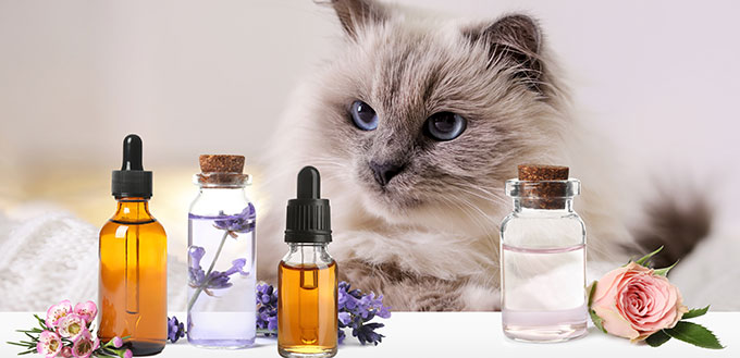 Aromatherapy for animals.