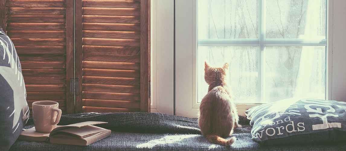 Best-Calming-and-Anti-Anxiety-Products-for-Cats