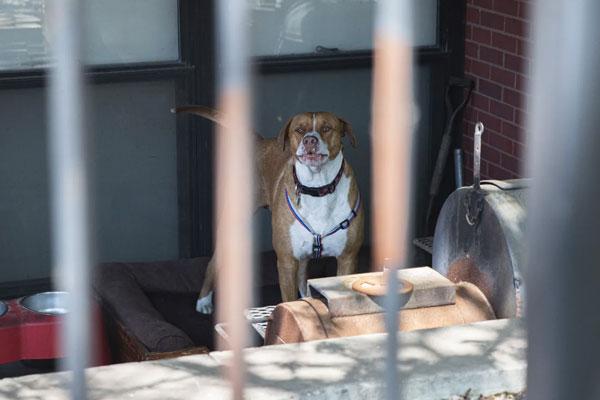 Dog at job