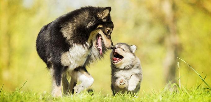 Heureuse famille de chiens qui ne craint ni malheur ni ennui et sera ensemble jusqu'à la toute fin
