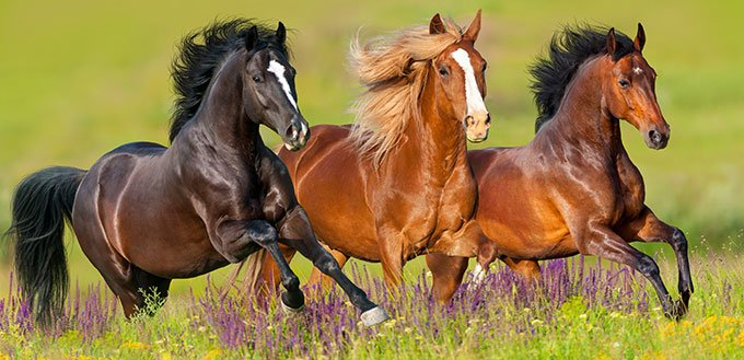 Horse Speed: Just How Fast Can a Horse Run?