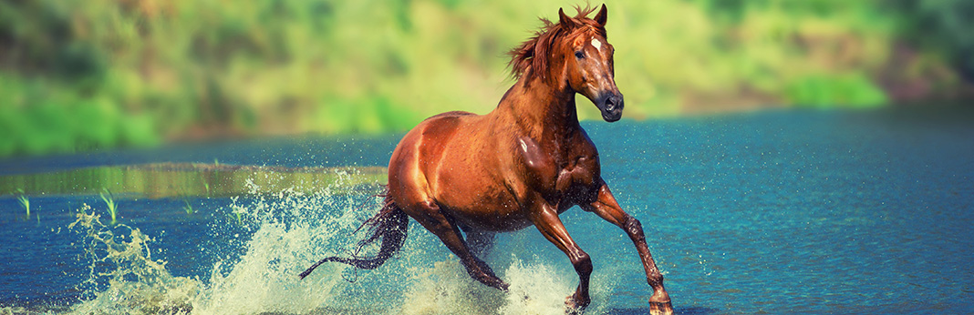 How Long Can a Horse Run in a Day