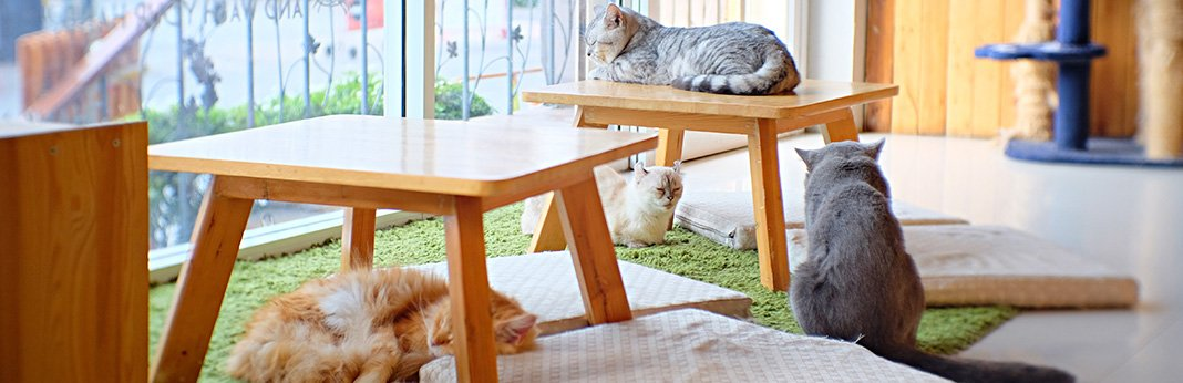 New Cat Cheat Sheet: Essential Products to Buy for Your New Cat