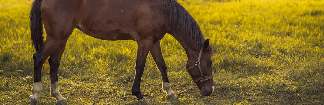 The-Lowdown-on-the-Equine-Diet—What-Do-Horses-Eat