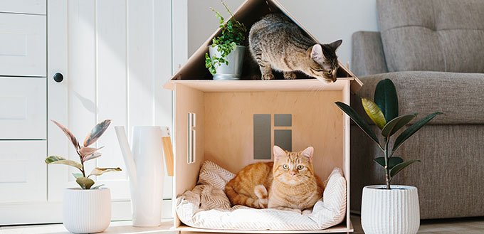 Two cats in wooden cat house living room scandinavian modern interior